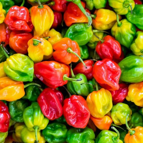 cropped-cropped-pile-of-chilies-1374651-scaled-1.jpg